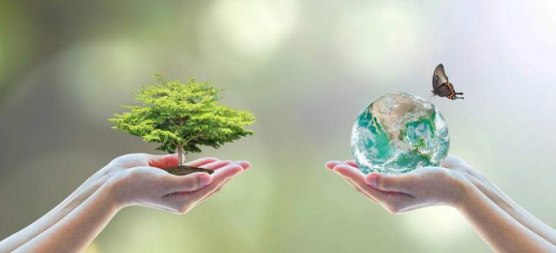 Ecologie et environnement, quelle différence ?