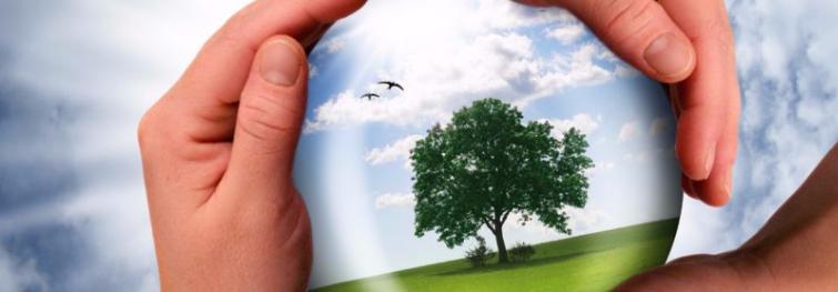 Les différentes organisations de protection de l'environnement
